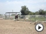 6 year old girl jumping 15hh horse