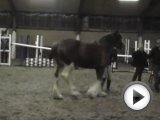 Clydesdale Horse Loose Jumping