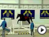Crazy Horse Jumping