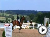 Eventing/Showjumping horse for sale (Comp…