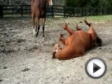 Girl almost TRAMPLED by HORSES play …