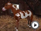 Horse Games Online Free Cool Horse Game